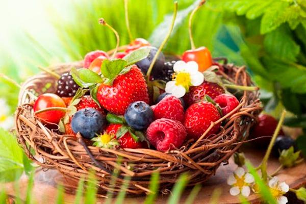 Удобрения для ягодных растений