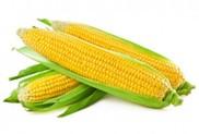 MERISTEM: результати застосування. Кукурудза